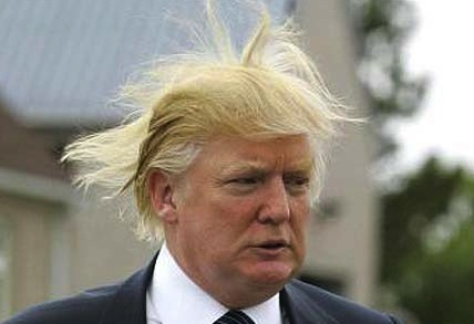 trump hair wind. hair donald trump hair photo