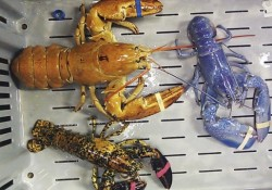 weird lobsters