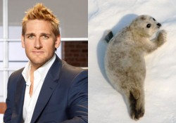curtis-stone-seal