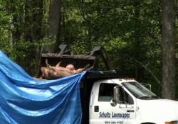 PETA Pig Truck Accident