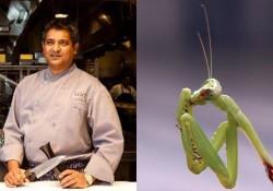 cardoz-mantis