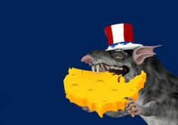 america-cheese-rat