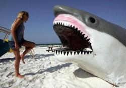 sharkweek-sharkmeat1