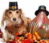 thanksgivingdog-copy