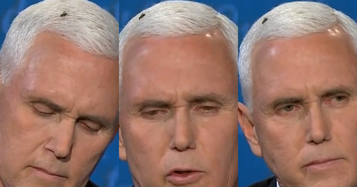 Pence-and-The-Fly.jpg